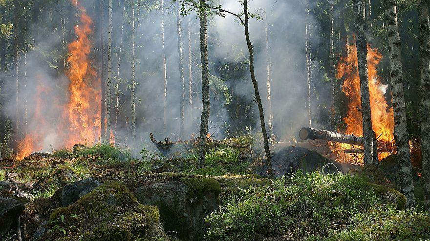 Mangal yaparken yangın çıkaran öğrencilere 27 milyon euro ceza kesildi