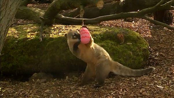 Tiere im Londoner Zoo feiern Ostern