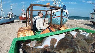 Hogy élnek túl a dán kis halászatok a nagyhalak mellett?