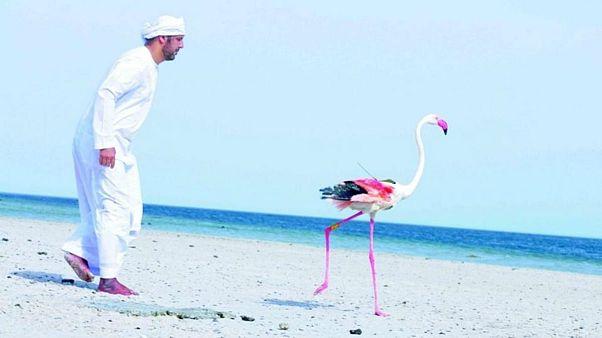 سفری ۱۳۰۰ کیلومتری به ایران؛ برنده مسابقه پرواز فلامینگوهای ابوظبی مشخص شد