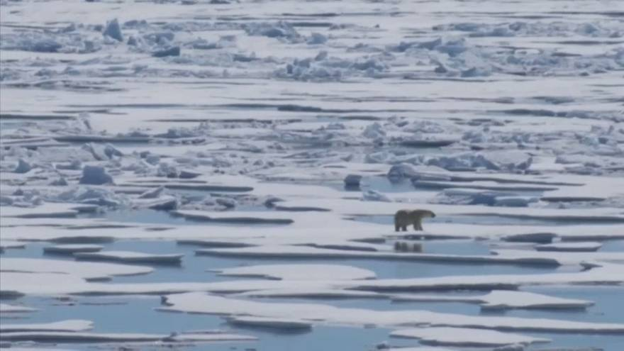 Giornata della Terra: le minacce al pianeta