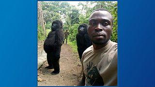 سلفی محیط بانان با گوریلها؛ روایتی از یک عکس و پارک ملی کنگو