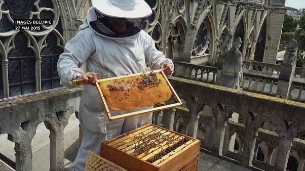 Abelhas de Notre Dame sobreviveram às chamas