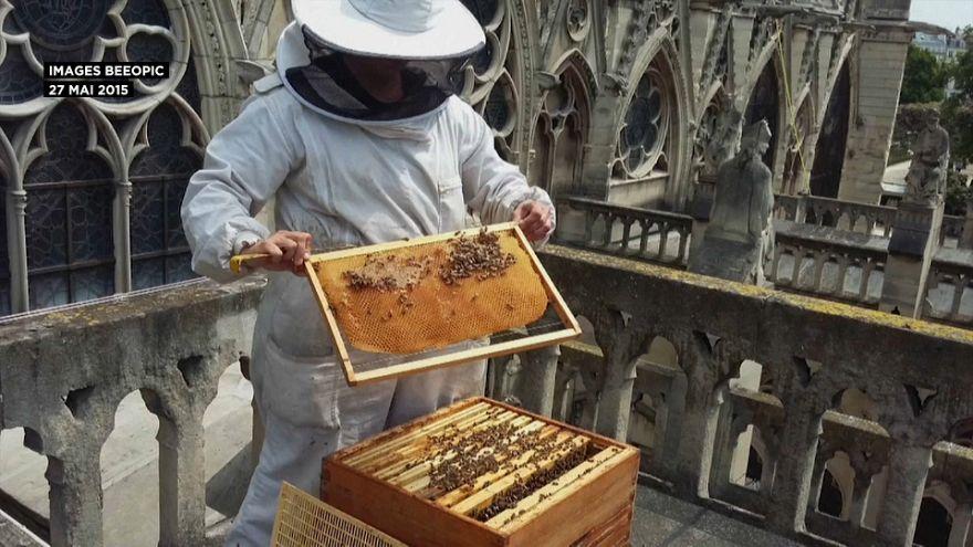 Notre-Dame: Bienen überleben Großbrand