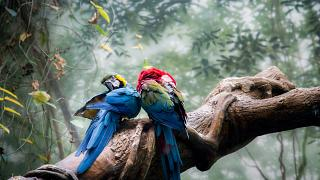 Best wildlife experiences of May