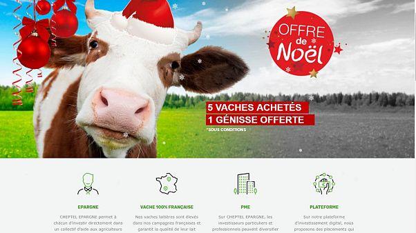 Fransa'da 'Çiftlik Bank' vakası: 50 kişi yatırım amacıyla hayali inek satın aldı