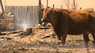 Разрушительные пожары в Забайкалье