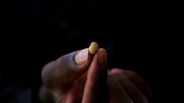 Eine Hand hält ein kleines Goldkorn zwischen den Fingern
