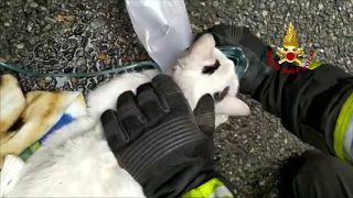 شاهد: وحدة إسعاف إيطالية تنقذ قطتين عبر استعمال أقنعة الأكسيجن