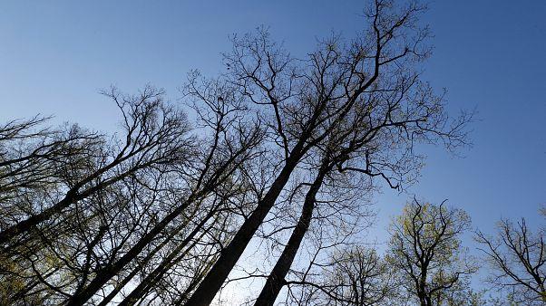 2018'de 12 milyon hektar tropikal orman yok edildi