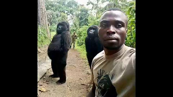 Különleges gorilla-szelfi