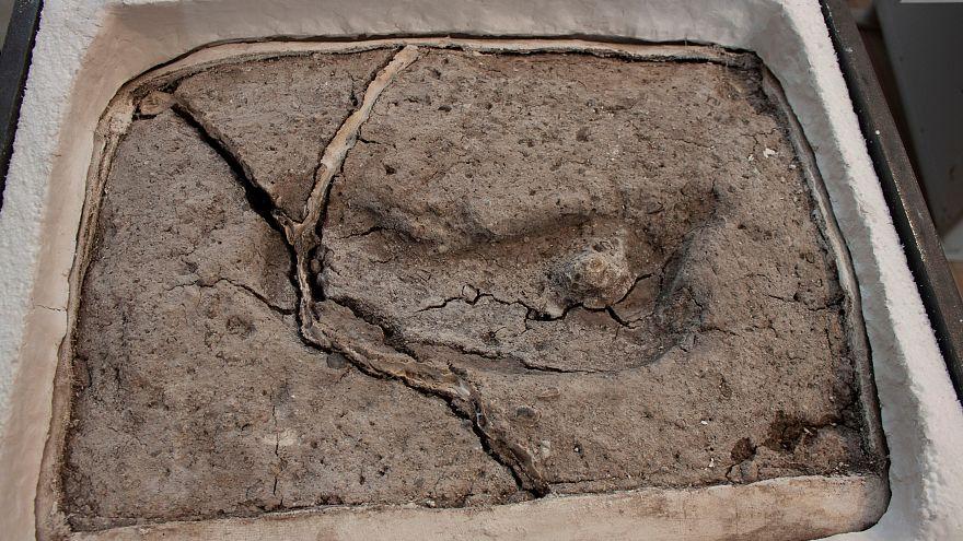 تایید قدیمیترین اثر پا کشف شده انسان در قاره آمریکا