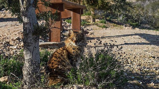 """تعرف على خطة أستراليا للتخلص من القطط الوحشية بـ """"النقانق"""""""