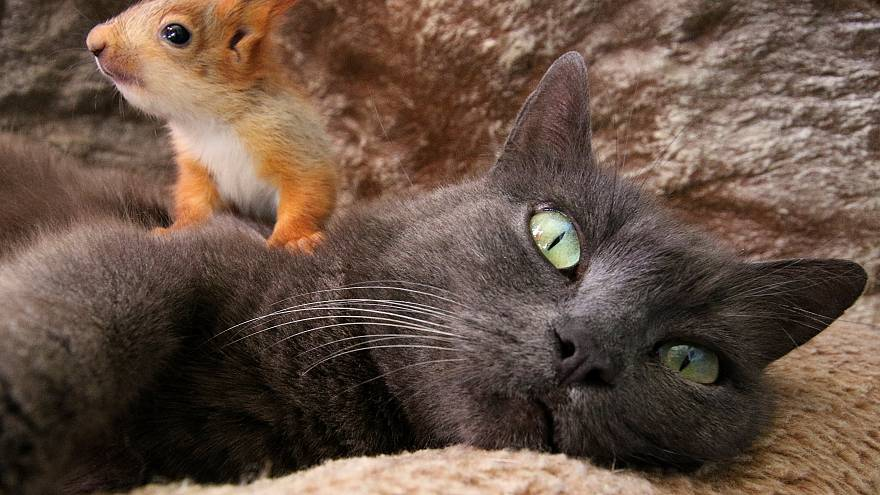 Pusha the cat with her baby squirrel in Bakhchisaray