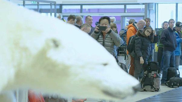 Cowboys und tote Eisbären: Tourismus auf Spitzbergen