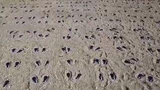 UK beach art commemorates US troops in WW2 tragedy