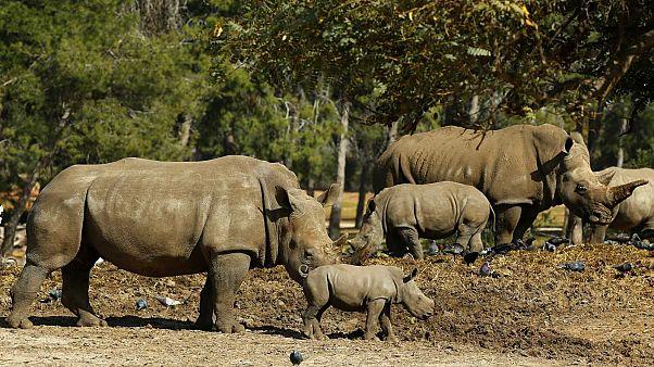 """6ème """"extinction de masse"""" sur Terre ? 1 million d'espèces seraient menacées"""