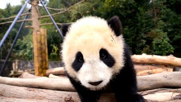 """Русско-китайская """"панда-дипломатия"""""""