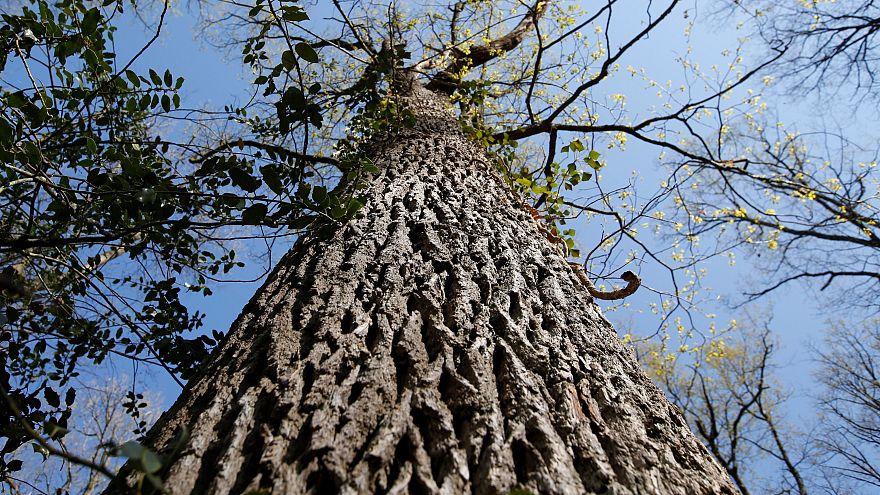 Egymilliárd fát ültet Ausztrália a következő 11 évben