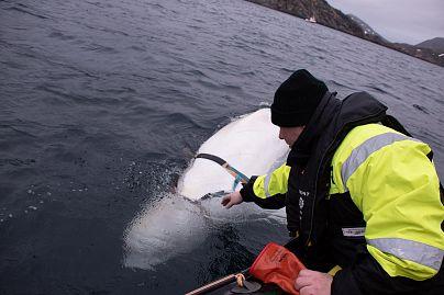Jørgen Ree Wiig / Norway Directorate of Fisheries