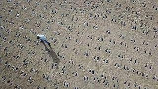شاهد: عرض فني مؤثر في ذكرى كارثة تمرين النمر العسكري في بريطانيا
