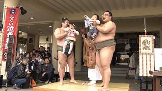 Babies cry and demons fly at bizarre Sumo weeping festival in Japan