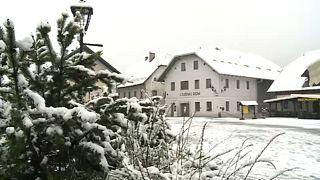 Slowenien: Tulpen im Eismantel