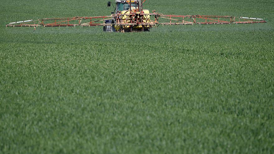 Küresel ısınma: Kernza tohumu yeryüzünü kurtarmak için bir çözüm olabilir mi?