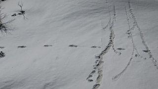 Hindistanlı asker dağcılar kar canavarının ayak izlerini bulduklarını ileri sürdü