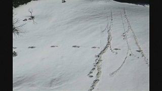 India: l'Esercito pubblica foto con impronte dello Yeti?