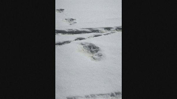 Exército indiano terá descoberto pegadas do yeti
