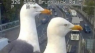 Trafik kontrol kamerasının önünde konan martılar sosyal medyada gündem oldu