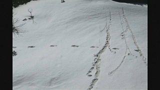 Гималаи: а был ли йети?
