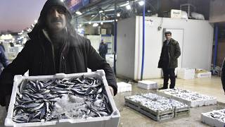 Karadeniz hamsisi Avrupa'da en çok Fransa'ya satıldı