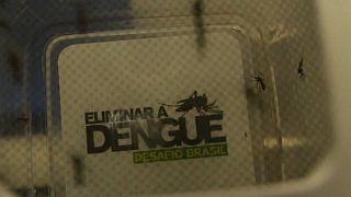 Aumenta o número de casos de Dengue no Brasil
