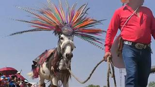 On Donkey Day the animals are decked out in costume and play polo