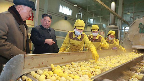 Kuzey Kore'de 10 milyondan fazla kişi gıda yardımına muhtaç