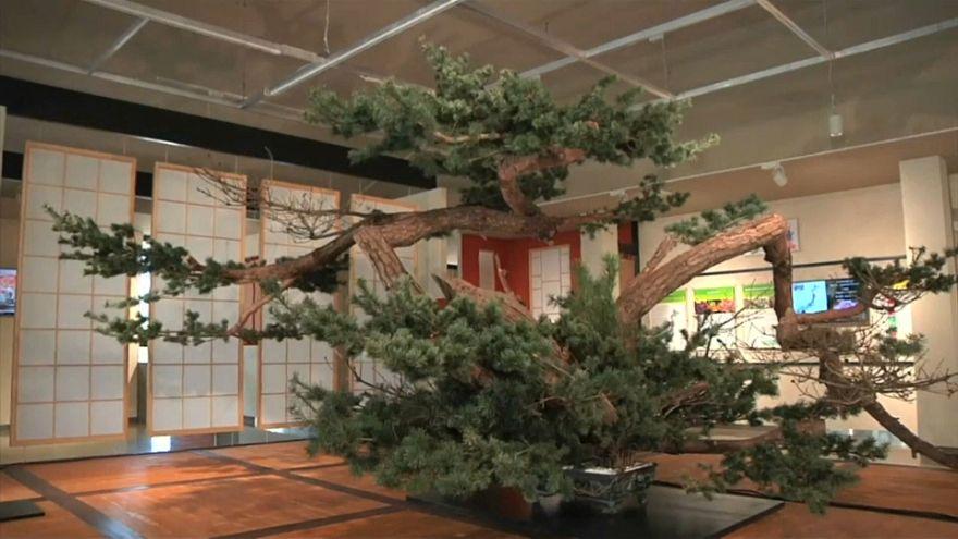 شاهد: حدائق يابانية مسحورة في معرض بكين الدولي