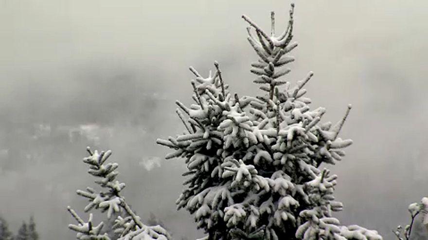 Майский снег в Гарце