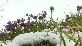 Winter returns to France, with snow and ice on the Côte d'Azur