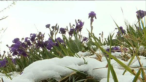 Непогода во Франции: ливни, снегопад и ветер до 140 км/ч