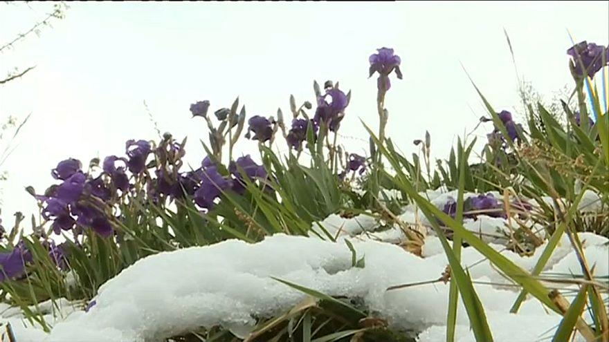 عودة الثلوج إلى بعض مناطق فرنسا