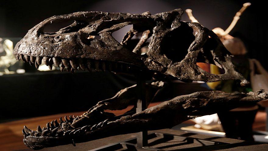 هل تلقى البشرية مصير الديناصورات أو الانقراض السادس؟