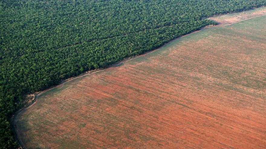 The Amazon rain forest bordered by deforested land.
