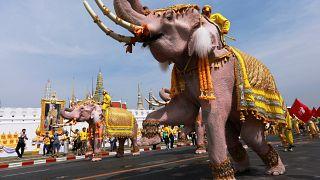 Слоны на коленях перед королем Таиланда