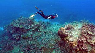 Plus d'une tonne de déchets retirés de mer Egée