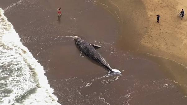 California: all'improvviso, una balena