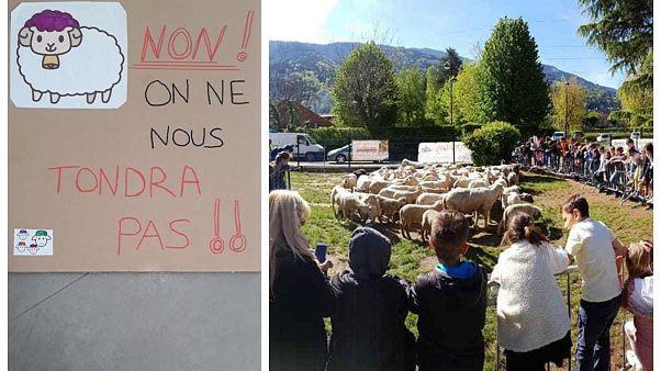 Ένα σχολείο έχει 15 νέους μαθητές...πρόβατα!