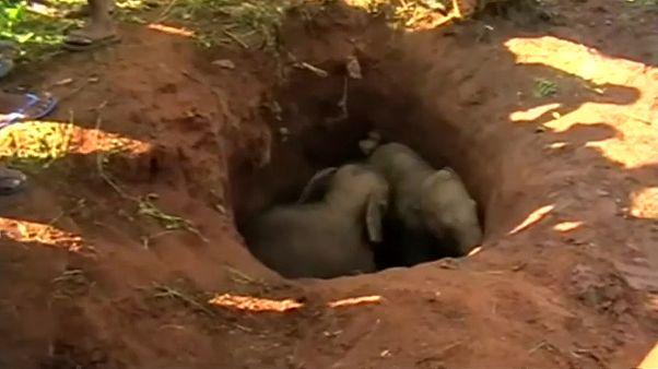 الفيلان الصغيران علقا في حفرة بعيدة عن أمهاتهما