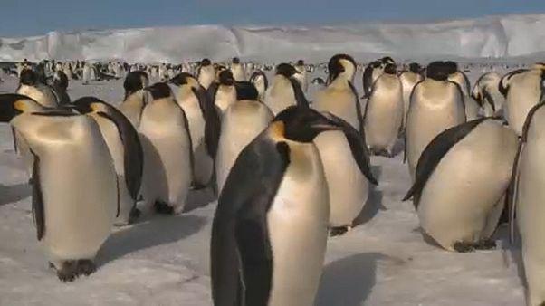 Degelo na Antártida altera biodiversidade